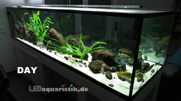 Aquarium 300x90x70 mit 2x eco+ DAY LED-Leiste\\n\\n23.09.2013 08:47