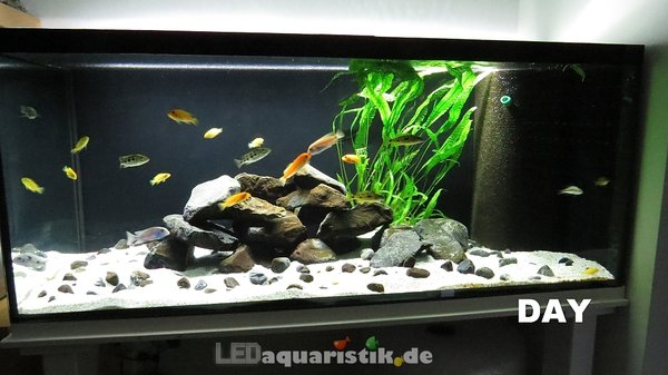 Aquarium 120x50x50 mit 1x eco+ DAY\\n\\n23.09.2013 08:48