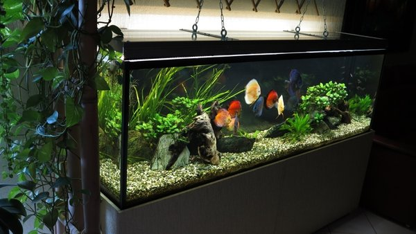 200cm Aquarium, 2x eco+ DAY, 2x eco+ SUNSET\\n\\n20.12.2013 16:31