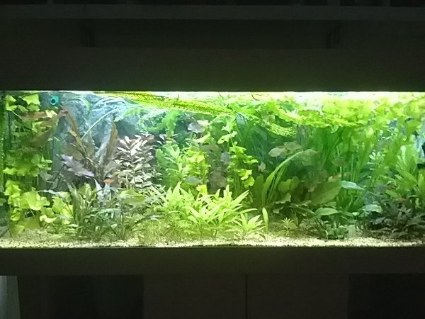 150cm Aquarium, beleuchtet mit 3x eco+ LED-Leisen je 120cm (SUNSET, DAY, POLAR)\\n\\n23.07.2015 15:08