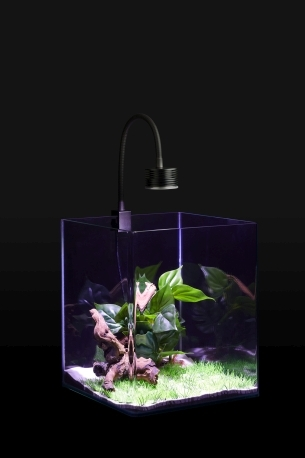 Led_Aquaristik_2019_09_200518_CHA