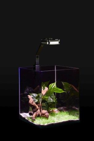 Led_Aquaristik_2019_09_200543_CHA